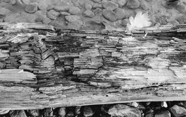 Wasserholz