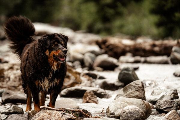 Hundefotografie Zentralschweiz