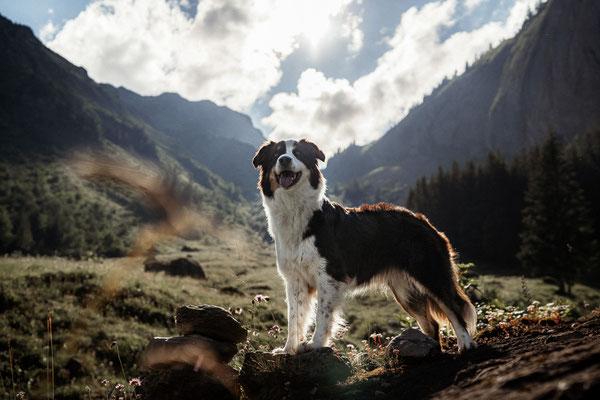 Hundefotografie uri