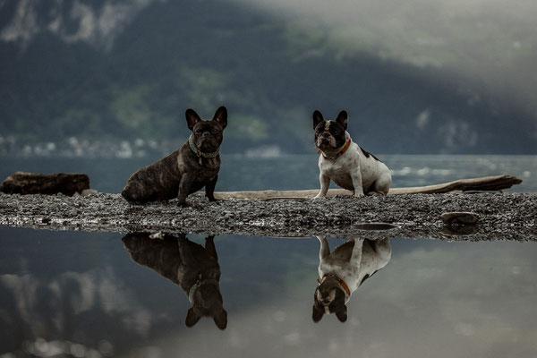 Schöne Hundefotos