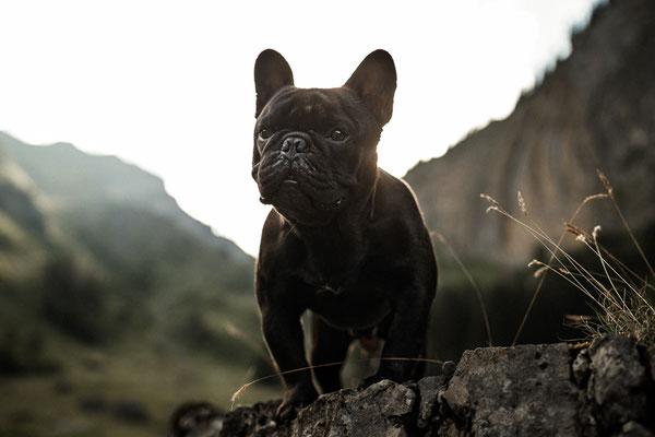 Hundefotos Schweiz