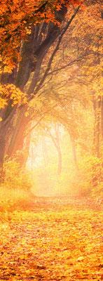 GL01 Allee im Herbst