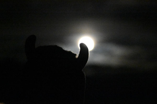 were-wolf-penguin at full moon