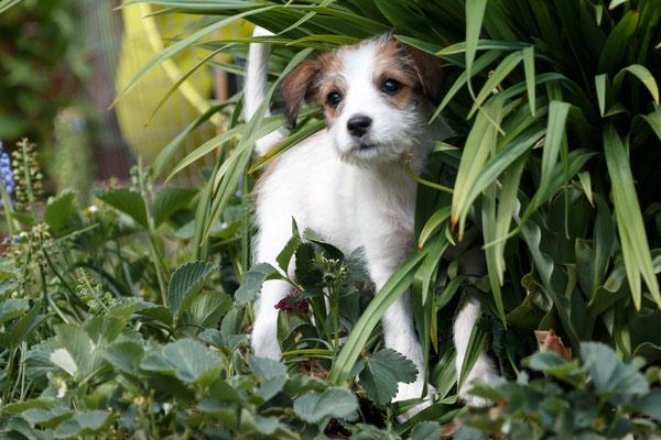 Benjie-Sansa vom langen Fuchsbau