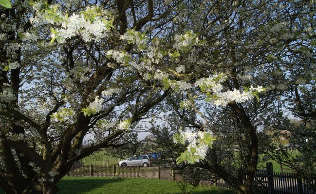 le printemps ponthoile Ferme Relais de la Baie de Somme gîtes de groupe baie de somme