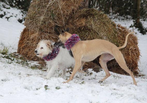 Winnie mit Dasha