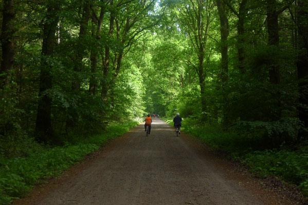 Im Forst Iloo (Foto: Dorit Hartz)