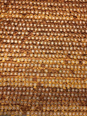 Les barrettes de gelée royale récoltée, avant l'extraction