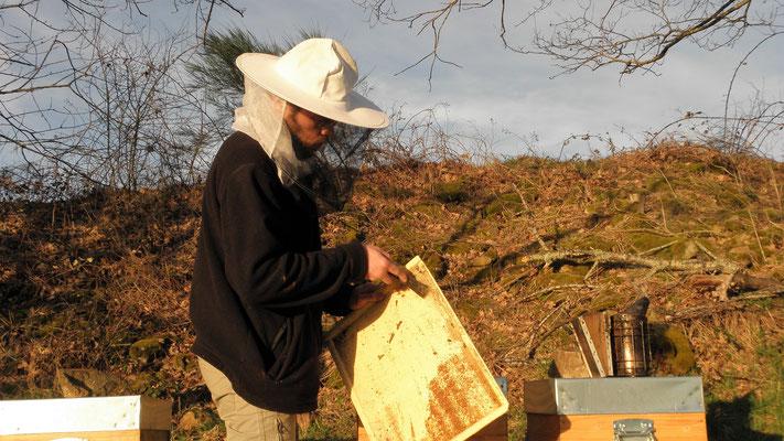 Visite de routine aux ruches