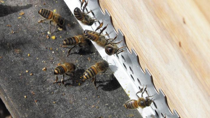 Les entrées et sorties de la ruche