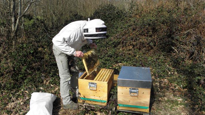 Un cadre de ruche