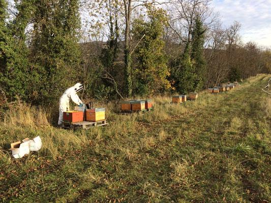 Un redoux après le début de-u froid : et hop, c'est le moment de faire les traitements (bio !) de l'hiver pour continuer la lutte contre varroa