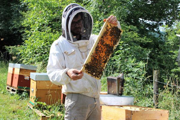 Dominique examine la production de miel d'une ruche