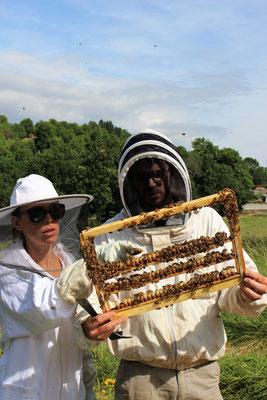 Est-ce que ça a bien fonctionné ? c'est parfois hétérogène selon les ruches (on est en pleine saison, les cheveux de dom ont poussé !)