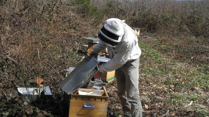 Nourrissement d'une ruche (quand il n'y a rien à butiner...)