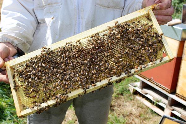 Un cadre de hausse d'une ruche en production