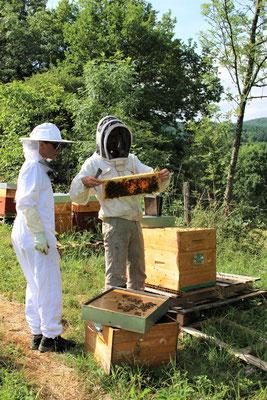 Dominique et Stéphanie aux ruches