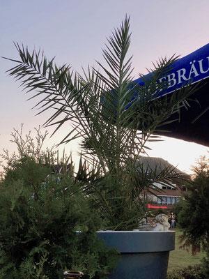 Palmen in der Aussengastronomie
