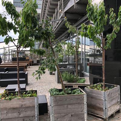 Grünpflanzen Gastronomie Terrasse