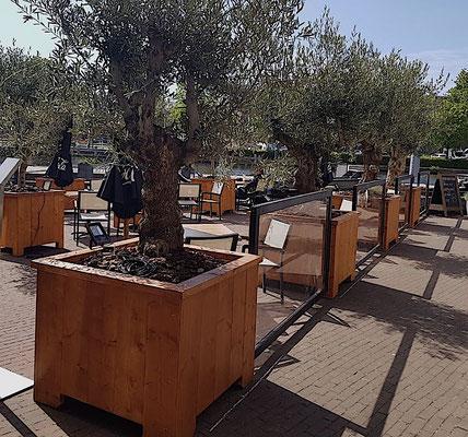 Olivenbaum Gastronomie Terrasse