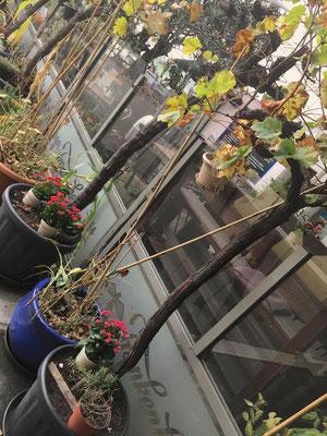 Biergarten mit vielen Pflanzen auf der Terrasse