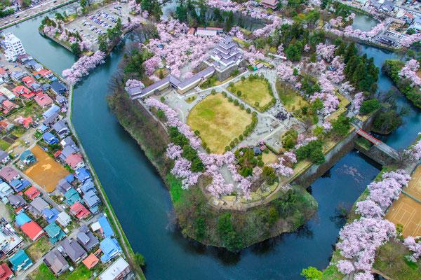 桜満開の頃4
