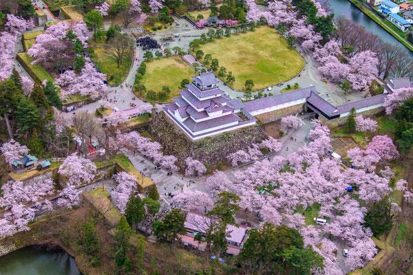 桜満開の頃3