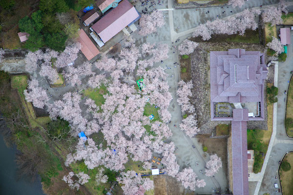 桜満開の頃5