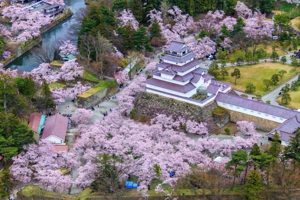 桜満開の頃2