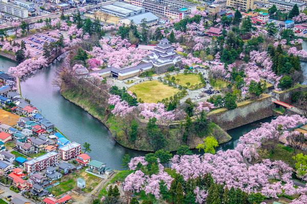 桜満開の頃1