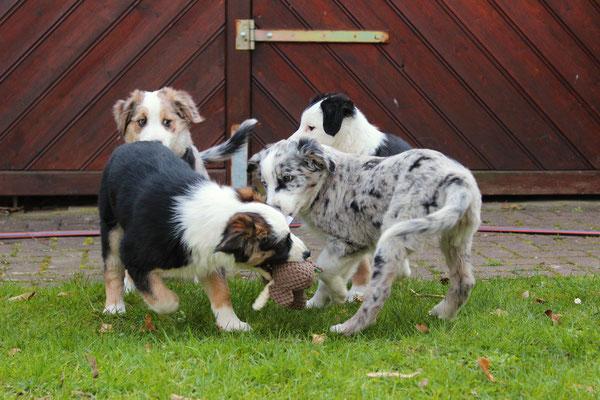 Shiva, Rika, Harley und Svea (von hinten links nach hinten rechts)
