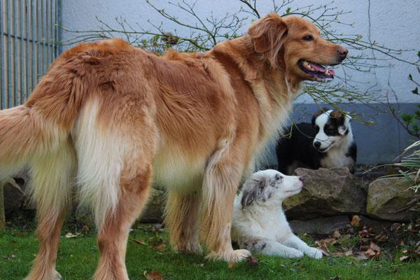 Bellis, Lenny und Rika (von links nach rechts)