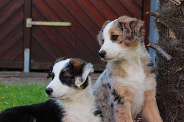 Rika und Shiva (rechts)