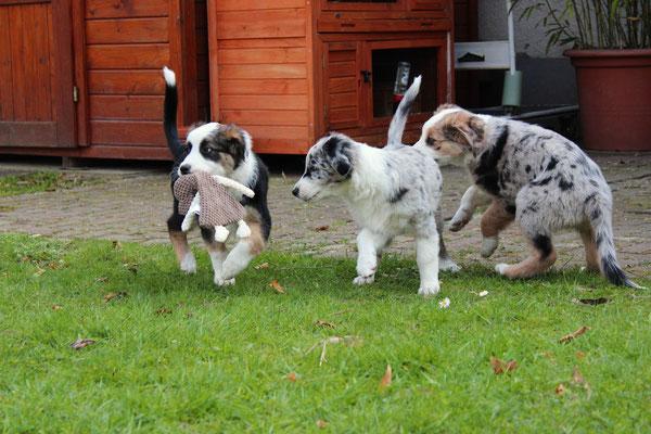 Rika, Harley und Shiva (von links nach rechts)