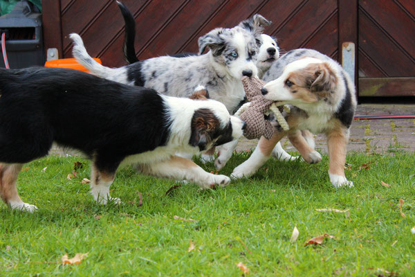 Rika, Harley, Svea und Shiva (von links nach rechts)