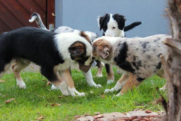 Harley, Rika, Shiva und Svea (von hinten links nach hinten rechts)