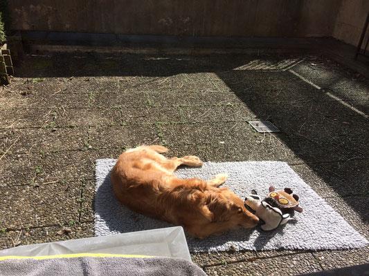 Bellis beim Sonnen auf meiner Terrasse (Mittwoch, 21. März 2018) - ja, da hätte saubergemacht werden müssen, aber - zu meiner Verteidigung - ich war zuvor einen Monat lang zuhause und davor war von Unkraut noch keine Spur