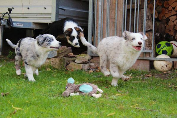 Harley, Rika und Lenny (von links nach rechts)