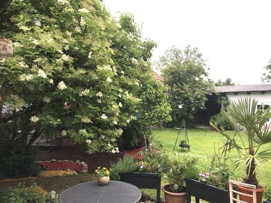 Unser Innenhof im AYURVEDA RHYENR Hof, voll mit Holunderblütenduft