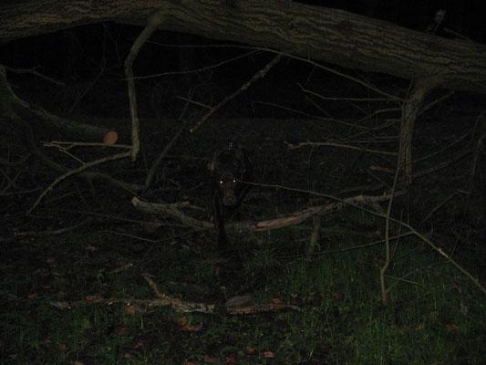 Da lag ein Baum überm Weg .....