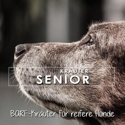 Kräuter für alte Hunde