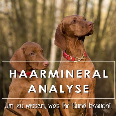 Eine Haarmineralanalyse für Ihren Hund deckt Mängel oder Überschüsse auf.
