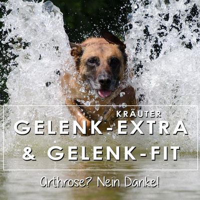 Barfkräuter für Hunde gegen Beschwerden im Bewegungsapparat wie Arthrose