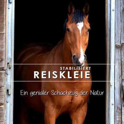 Reiskleie für Pferde mit Stoffwechselproblemen, getreidefreie Pferdefütterung, magere Pferde