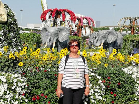 in Dubai's Miracle Garden
