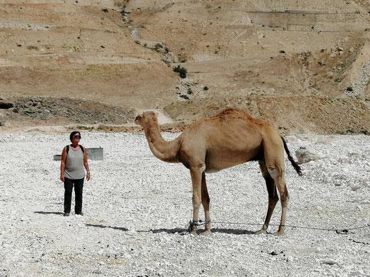 das einzige Lebewesen im Wadi (ausser ein paar Vögel)