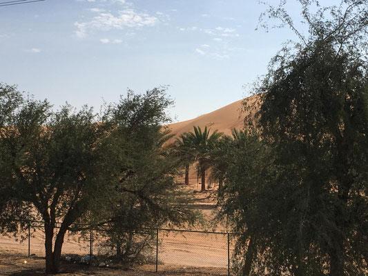 umsäumt von Palmen und Plantagen