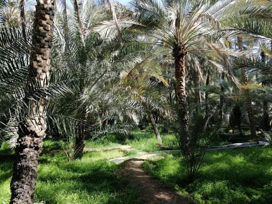 Al-Ain-Oase