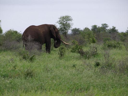 ein Elefant mehr