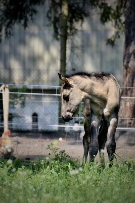 Stripes, ca. 18 Stunden nach seiner Geburt